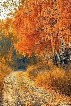 Country road in autumn (Russia) by Anton Starikov [photographer identified by watermark, but I can't find a link with this photo] Autumn Scenes, All Nature, Fall Pictures, Belle Photo, Beautiful World, Autumn Leaves, Paths, Scenery, Images