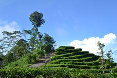 Kebun Teh Nglinggo Yogyakarta Keindahan Alam yang Berbukit-bukit - Yogyakarta