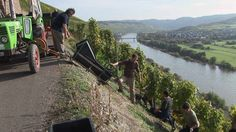 Viticulture on the steep slopes of the Moselle #video #wine #moselle