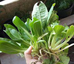 Aneka Sayuran Yang Hidup di Daerah Minim Sinar Matahari ~ Rumah Cherish 88