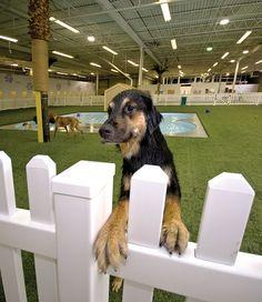 Dog Boarding Kennels, Pet Boarding, Shelter Dogs, Animal Shelter, Hotel Pet, Indoor Dog Park, Luxury Dog Kennels, Dog Kennel Designs, Dog Playground