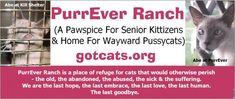 #61 (6/14/18): In honor of my beloved Tanner, who died two days earlier, I donated to PurrEver Ranch, a sanctuary and hospice for elderly cats. #PapaProject #RAOK