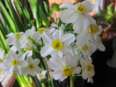 Forced Bulbs: What to Keep, What to Toss