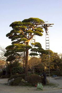Landscaper, Aichi Prefecture, Japan. Perfection does not just happen.