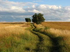 Hay que disfrutar mientras recorremos el camino...