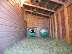 Bed, hay, heat lamps and heated water