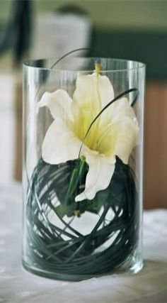 """Clear Glass Cylinder Vase 6"""" tall X 3-1/4"""" .  Too much bear grass and the vase should be a little taller."""