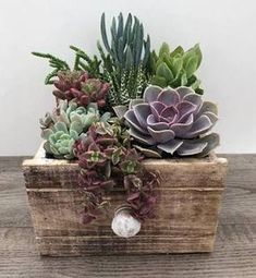 Image result for small succulent plant arrangements
