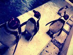 Pinguine im Tierpark Bochum