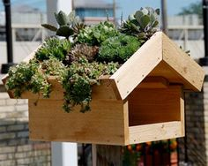 Green Roof Bird Feeder | Garden Decor & Garden Crafts Could do the whole shed roof like this!
