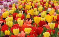 flowers pictures | Most Beautiful Flowers Pictures