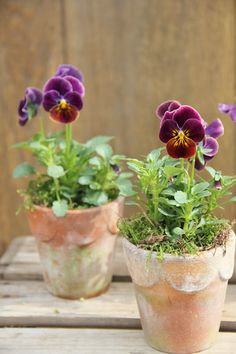Creative spring garden pots and planters to inspire you right into spring. Perfect for your porch or on your table, these combinations are easy and beautiful.