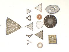 Cleaned Diatom Samples