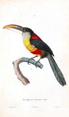 Animal – Bird | Vintage Printable at Swivelchair Media – Beta