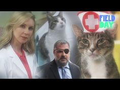 Stop What You're Doing And Watch 'Cat Hospital'   Above Average