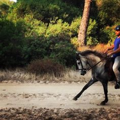 Enjoy autumn rides in Doñana #andalusia #horseriding #trailriding