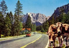 Austria - Fernpass - front | 70s postcard from Austria / Österreich, Tyrol /Tirol, Fernpass, VW Beetle / Käfer, FIAT 850 and two nice ladies :) Fiat 850, Austria, Holidays, Animals, Beautiful Places, Animais, Holidays Events, Animales, Animaux