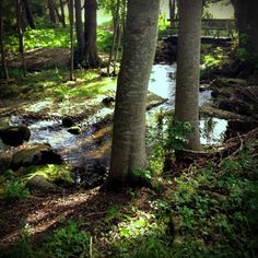 We took a walk in the nature by the #Lummelundagrotta #Gotland #Sweden