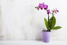Il existe de nombreuses bonnes raisons d'avoir des plantes d'intérieur chez soi, et même d'avoir des plantes dans sa salle de bain. Calathea, Plante Zz, Violet Plant, Decoration Plante, Incredible Gifts, Low Maintenance Plants, Christmas Cactus, Ornamental Plants, Snake Plant