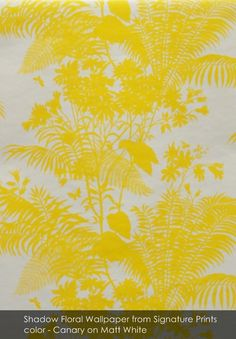 Shadow Floral wallpaper from Signature Prints in Canary on Matt White