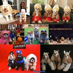 Halloween dog costumes for a group Best Dog Costumes, Puppy Halloween Costumes, Pet Costumes, Costume Ideas, Dog Cone, Group Of Dogs, Big Dogs, Funny Stuff, Wordpress