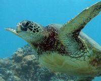 Turtle Town Snorkling