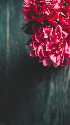 Pink Flower aesthetic and Ferris Wheel in beautiful garden. Pink Flower aesthetic and Ferris Wheel in beautiful garden. Floral Wallpaper Iphone, Pink Wallpaper, Cellphone Wallpaper, Wallpapers Wallpapers, Pretty Wallpapers, Beautiful Flowers Wallpapers, Beautiful Nature Wallpaper, Flower Background Wallpaper, Cute Wallpaper Backgrounds