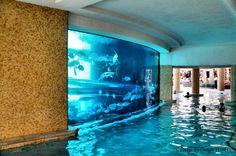 huge aquarium built into pool