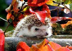 2000x1414 High Quality hedgehog