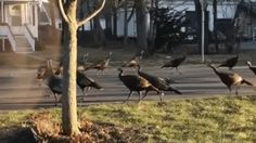 Animated gif. birds, walking around