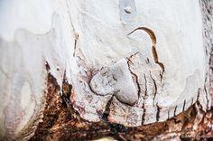 Ma boutique en ligne  Retrouve une sélection de mes photographies dans ma boutique en ligne !   - Quand la Nature inspire l'Âme : https://marieguibouin.lumys.photo/natureinspirante  - Le Tour de Nantes en 80 jours : https://marieguibouin.lumys.photo/letourdenantesen80jours