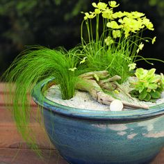 Beach garden in a pot If you yearn for the beach but live miles inland, you can re-create the look easily in a pot. You'll need: -a low, wide pot or bowl, approximately 14 inches in diameter -potting soil -3 small, slow-growing plants in 4-inch nursery pots -horticultural-grade washed sand (a 1-qt. bag is enough for a 14-inch pot) -small pieces of driftwood or other found objects