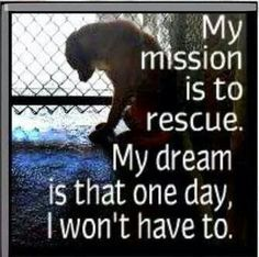 """""""My mission is to rescue.  My dream is that one day, I won't have to."""" ~Tia Torres, Pit Bulls & Parolees.  She is one of my heroes."""