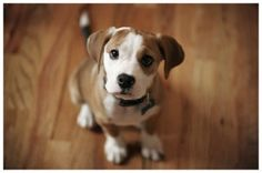 Why It Is Essential To Crate Train Your Pit Bull Terrier Puppy Dog