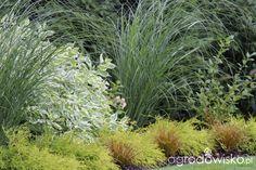 Rośliny na bardzo nasłonecznioną stronę domu - Forum ogrodnicze - Ogrodowisko