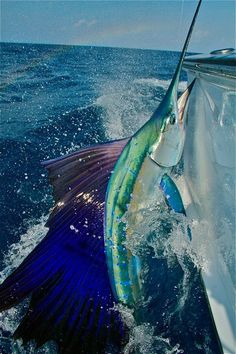 Poisson épée, espadon - Can you say LIT UP? photo by Rick Sorensen. Salt Water Fish, Salt And Water, Fresh Water, Deep Sea Fishing, Gone Fishing, Fishing Lures, Fishing Knots, Fishing Tips, Fishing Basics
