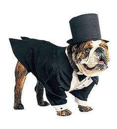 Outrageous Halloween Costumes for Pets  sc 1 st  Pinterest & 23 Unbelievable Halloween Costume Ideas For Your Dog | Funny dog ...