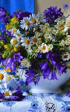Фотография Flowers Nature, Exotic Flowers, Amazing Flowers, Pretty Flowers, Spring Flowers, Blue Flowers, Wild Flowers, Beautiful Flowers Wallpapers, Special Flowers