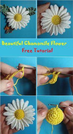 Krásná chamoline Flower