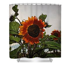 Sunflowers and Storm Shower Curtain