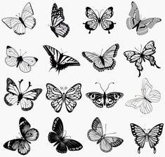 set butterflies silhouettes vector illustration