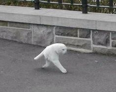 Funny pictures about Panoramic photo goes very wrong. Oh, and cool pics about Panoramic photo goes very wrong. Also, Panoramic photo goes very wrong. Funny Animal Pictures, Cute Funny Animals, Cute Cats, Funny Cats, Funny Cat Images, Hilarious Pictures, Meme Chat, Cat Memes, Funny Memes