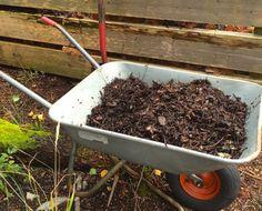muldet_hagevafall_900 Bokashi, How To Dry Basil, Garden Tools, Herbs, Gardening, Compost, Yard Tools, Lawn And Garden, Herb