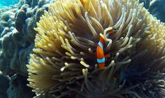 Pro Dive Davao offers an Aqua Experience with or without a intro dive. A day tour like no other. Lunch, snacks and entertainment included. Explore the Coral Aqua, Coral, Davao, Lunch Snacks, Day Tours, Scuba Diving, Philippines, Entertainment, Explore