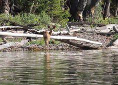 Where is Utah? - Deer by Fish Lake Utah Utah Camping, Outdoor Camping, Close To Home, Lakes, Perfect Place, Deer, Places To Go, Families, Fishing
