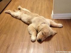 Pooped puppy