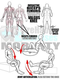 Bow Legs Correction - Rolling the Biceps Femurs to Correct Valgus Knee #prehabexercises Overactive Bicep Femoris (Lateral Hamstrings) will contribute to an inward collapsing of the knees (Valgus Knee) which threatens the integrity of the ACL and also leads to an inefficiency in force output and/or absorption. Rolling the Lateral Hamstrings with an emphasis on the Biceps Femurs to help restore proper knee alignment. Additionally combine this targeted focus on the Biceps Femurs with a ta...