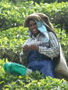Smiley Tea Picker, Munnar.  Kerala, India.