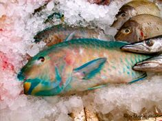 Fresh, colorful fish in Phuket, Thailand
