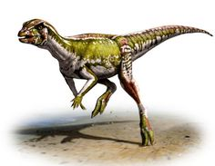 Researchers have announced the discovery of a new small plant-eating dinosaur, Albertadromeus syntarsus